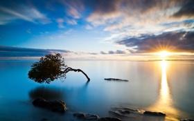Обои море, небо, дерево, закат солнца