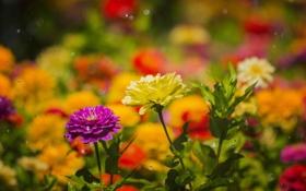 Картинка капли, цветы, дождь, лепестки, сад, луг