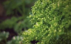 Обои зелень, трава, макро, свежесть, фото, куст, растения