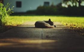 Картинка кошка, сон, травка, cat, боке