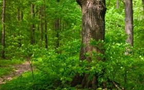 Обои зелень, лес, ветки, Деревья