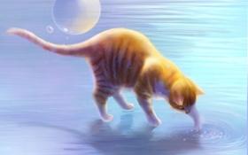 Обои кошка, вода, круги, арт, рыжая, пузырь