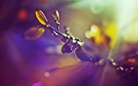 Обои листья, солнце, зима, настроение, боке, цвет