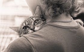 Картинка кот, взгляд, объятия, сепия, плечо, расставание