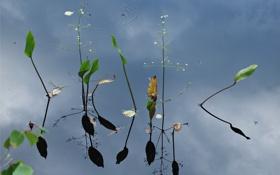 Обои листья, вода, природа, отражение, растения, стебель