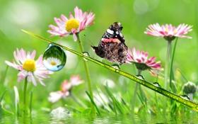 Обои стебель, бабочка, капли, цветы