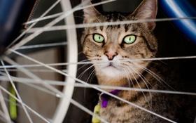 Картинка кот, сидит, спицы, колесо, взгляд, животное, кошка