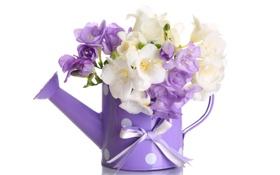 Обои цветы, лейка, flowers, violet