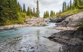 Обои лес, ручей, Канада, Альберта, Banff National Park, речка, Alberta