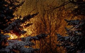 Обои зима, свет, снег, ветки, природа