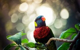 Обои листья, блики, птица, ветка, попугай, разноцветный, лори