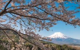 Обои ветки, вишня, дерево, гора, вулкан, Япония, сакура