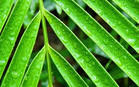 Обои вода, капли, лист, роса, растение, ветка