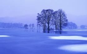 Обои лед, зима, снег, деревья, пейзаж, синий, природа