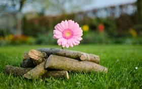 Картинка зелень, цветок, трава, блики, размытость, дрова
