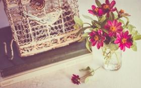 Обои цветы, клетка, лепестки