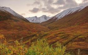 Картинка осень, небо, трава, снег, горы, растение, склон