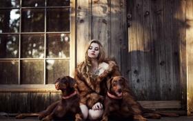 Картинка собаки, девушка, дом
