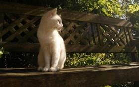 Картинка кошка, лучи, свет, скамейка, белая, сидит