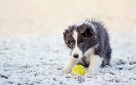 Обои друг, мяч, собака