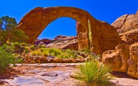 Картинка камни, скалы, трава, природа, Green & Orange, The Grand Canyon, Arizona