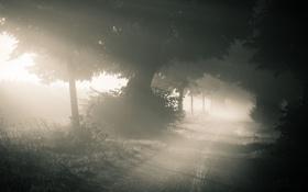 Обои дорога, лес, природа, туман, утро