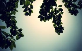 Обои листья, обои, ветки, деревья, фото, ветви, природа
