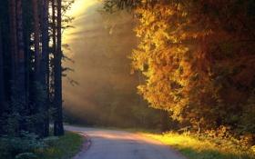 Картинка дорога, солнце, лучи, деревья
