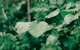 Обои листья, дерево, ветка, насекомое, зеленое