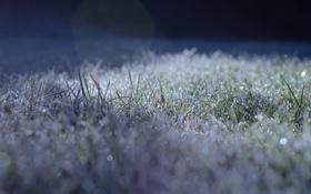 Обои холод, иней, трава, газон