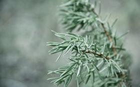 Картинка 2560x1600, bokeh, трава, растение, plant, grass, focus
