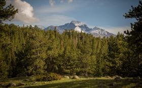 Обои лес, деревья, горы, поляна, Колорадо, Colorado, Rocky Mountain National Park