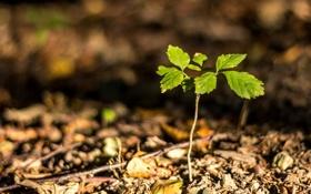 Картинка листья, макро, зеленый, фон, земля, widescreen, обои