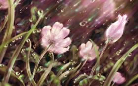 Обои трава, капли, линии, цветы, дождь, лепестки