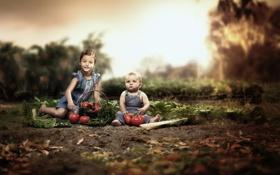 Картинка мальчик, девочка, томаты, грядка