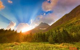 Обои горы, восход, рассвет, ели