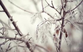 Обои зима, снег, ветки, иний, листва, Quiet