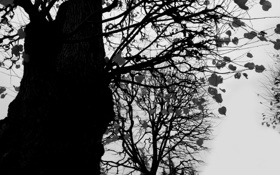 Обои осень, листья, ветки, дерево, холодно