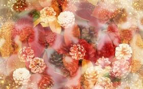 Картинка шишки, листики, рамытость