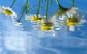 Обои белый, вода, цветы, желтый, зеленый, отражение, фон