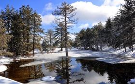 Обои Кипр, солнце, вода, деревья, зима, снег, отражение