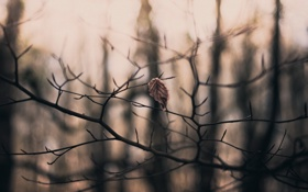 Обои ветки, природа, лист