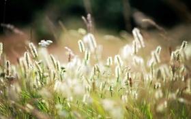 Обои поле, лето, природа, травы