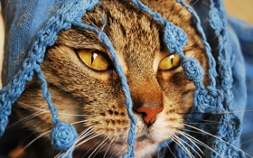 Обои глаза, нос, накидка, красивое котэ
