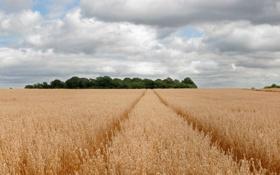 Обои поле, пейзаж, природа