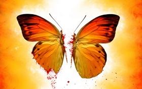 Обои свет, обои, бабочка, половина, крылья, половинка