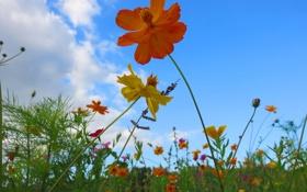 Картинка облака, трава, небо, лепестки, макро, цветы