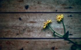 Обои цветы, фон, доски