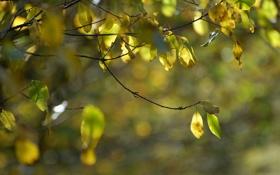 Обои осень, ветки, природа, листва