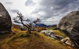 Картинка трава, пейзаж, природа, камни, дерево